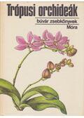 Trópusi orchideák - Sulyok Mária