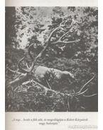 A keleti és déli Kárpátokban - Nadler Herbert