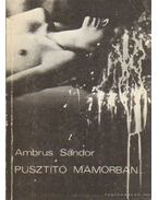 Pusztító mámorban - Ambrus Sándor
