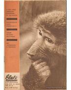 Élet és tudomány XIX. évf./47. szám - 1964. XI. 20. - Kocsis Ferenc