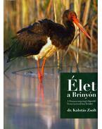 Élet a Brinyón - Dr. Kalotás Zsolt