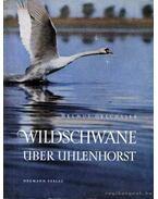 Wildschwane über Uhlenhorst - Dreschsler, Helmut