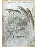 Der Teichmolch - Freytag, Günther E.