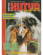 Nemzetközi Kutya Magazin II. évf. 1997/6. - Gácsi Márta