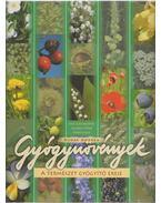 Gyógynövények - Buday Andrea