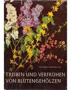 Treiben und Verfrühen von Blutengehölzen - Helmut Rupprecht