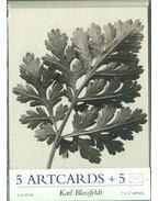 Karl Blossfeldt: 5 Artcards with envelopes
