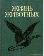 Az állatok élete 6. (Жизнь животных 6) - Krjukov, T. P. (szerk.)