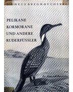 Pelikane Kormorane und andere Ruderfüssler (Pelikán, kormorán és más gázló madarak) - Dr. von Boetticher, Hans