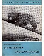 Die Halbaffen und Koboldmakis - Dr. von Boetticher, Hans