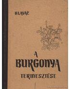 A burgonya termesztése - Ján, Hlavác