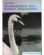 Höckerschwan, Singschwan, Zwergschwan (A bütykös hattyú, az énekes hattyú és a kis hattyú) - Hilprecht, Alfred