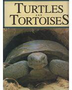 Turtles and Tortoises - Lehrer, John