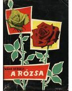 A rózsa - Márk Gergely