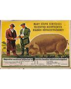 Nagy súlyu sertéssel teljesítsd hizottsertés beadási kötelezettségedet! propaganda kisplakát