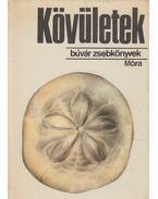 Kövületek - Scholz Gábor