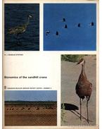 Bionomics of the sandhill crane (A Kanadai daru életviszonyai) - Stephen, Douglas W. J.