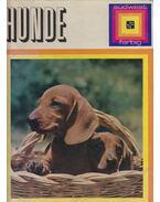 Hunde - Torregrossa, Adriano