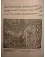 A vadállomány fenntartásának lehetőségei - Bencze Lajos