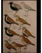 Wir bestimmen Die Vögel Europas - Makatsch, Wolfgang